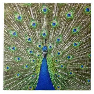 Paon montrant ses plumes, en tant qu'élément d'a grand carreau carré