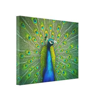 Paon - toile d'art de faune 18x24 toiles tendues sur châssis