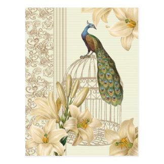 Paon vintage sophistiqué de cage à oiseaux de lis carte postale