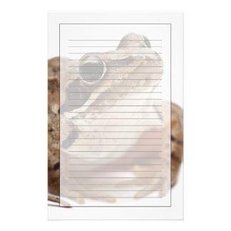 Papeterie Amarrez la grenouille - arvalis de Rana