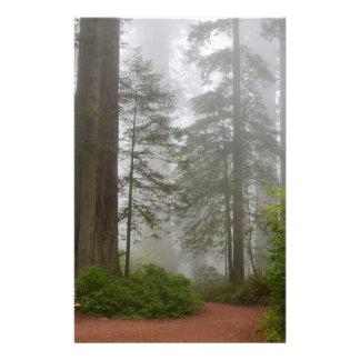 Papeterie Brouillard de parc national de séquoia