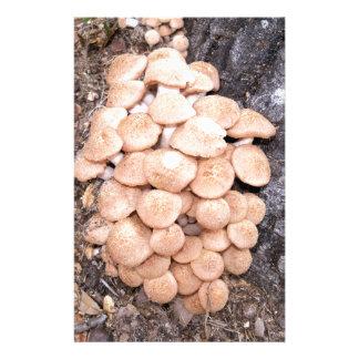 Papeterie champignons de miel ringless