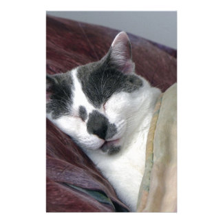 Papeterie Chat faisant une sieste