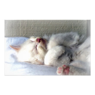 Papeterie Chaton somnolent