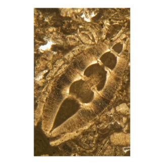 Papeterie Chaux miocène sous le microscope