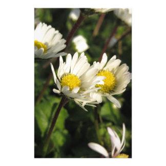 Papeterie Fleurs de marguerite blanche sur l'arrière - plan