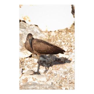 Papeterie Hamerkop (umbretta de Scopus) sur une roche