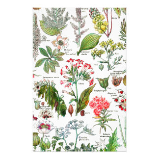 Papeterie Illustrations botaniques