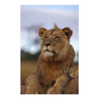 Papeterie lion