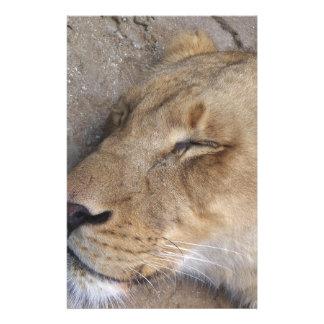 Papeterie Lionne de sommeil