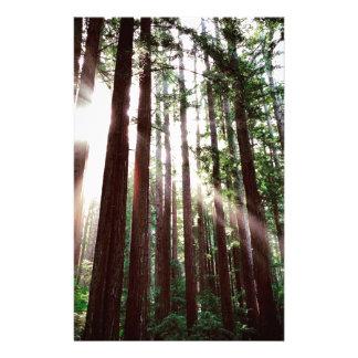 Papeterie Parc national de séquoias
