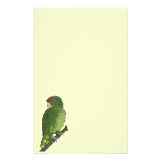 Papeterie Perroquet vert