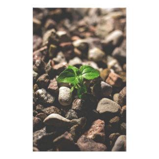 Papeterie Plante feuillu vert commençant à se développer sur