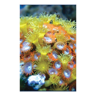 Papeterie roche de fleur de fond sous-marin