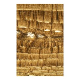 Papeterie Section mince de chaux de Nummulite sous la MICR