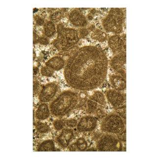Papeterie Section mince de chaux paléozoïque sous la MICR