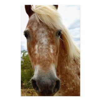 Papeterie Sucrez le cheval d'Appaloosa, _