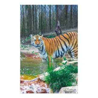 Papeterie Tigre