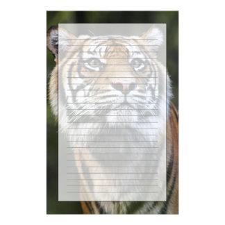 Papeterie Tigre de Sumatran (sumatrae du Tigre de Panthera)
