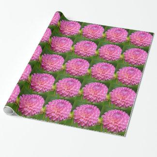 Papier Cadeau Affiche rose abondante de dahlia et de bourgeon