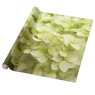 Papier Cadeau Arrière - plan blanc de fleur d'hortensia
