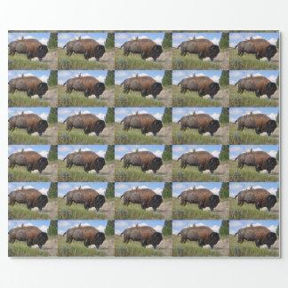 Papier Cadeau Buffalo sur le papier d'emballage de jour