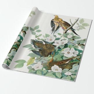 Papier Cadeau Colombe de tortue de la Caroline, oiseaux de