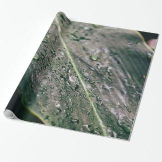 Papier Cadeau Feuille verte avec des baisses de l'eau, Botanics