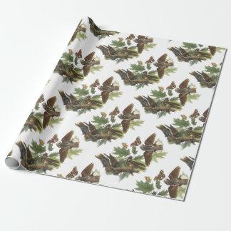 Papier Cadeau Fouet-pauvre- par Audubon