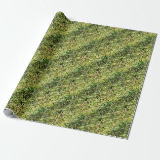 Papier Cadeau Haricots verts…