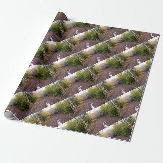 Papier Cadeau Kevin le Dalmate