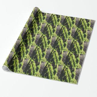 Papier Cadeau La mousse verte dans le détail de nature de la