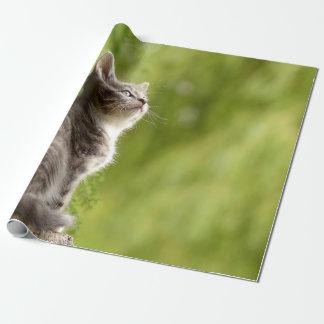 Papier Cadeau Le chaton gris et blanc minuscule scrute jusqu'au
