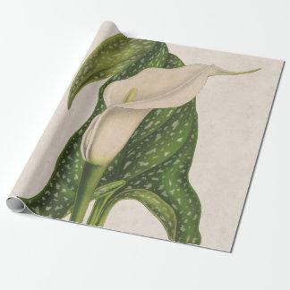 Papier Cadeau Le vert vintage de zantedeschia de fleur laisse le