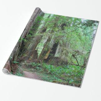 Papier Cadeau Les séquoias - séquoia
