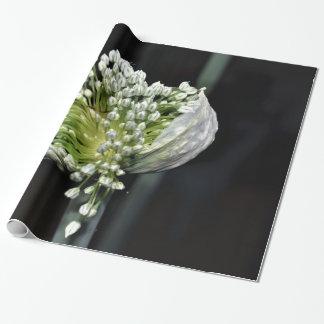 Papier Cadeau Oignon fleurissant de ressort