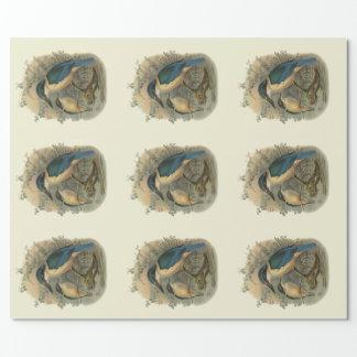Papier Cadeau Oiseaux vintages de NZ de la Science -