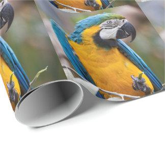 Papier Cadeau Papier d'emballage d'ara bleu et jaune