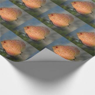 Papier Cadeau Papier d'emballage de disque en pierre de pigeon