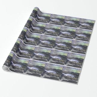 Papier Cadeau Papier d'emballage de tortue