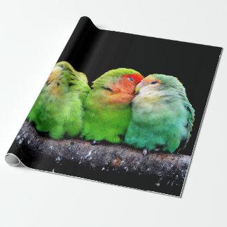 Papier Cadeau Perroquets colorés