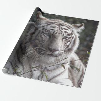 Papier Cadeau Plan rapproché blanc de tigre