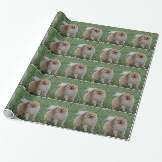 Papier Cadeau Pomeranian mignon