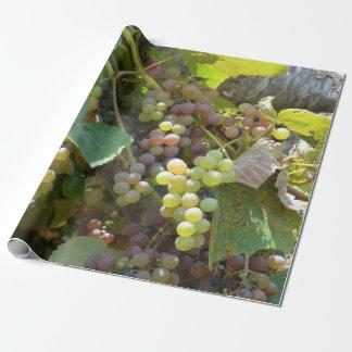 Papier Cadeau Vignobles de la Californie