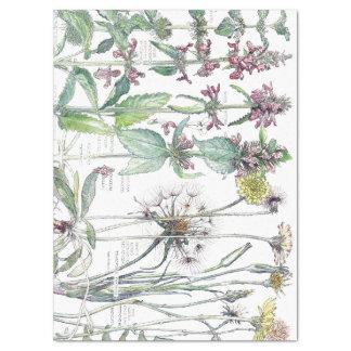 Papier de soie de soie vintage de fleurs sauvages