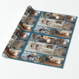 Papier d'emballage de chats papier cadeau
