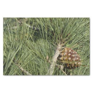 Papier Mousseline Arbre de la Californie de plan rapproché de pin de