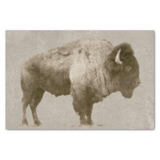 Papier Mousseline Bison américain