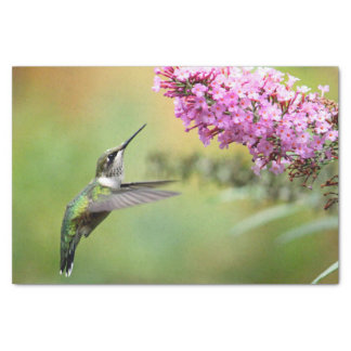 Papier Mousseline Colibri 5053