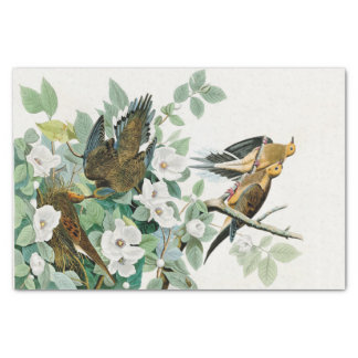 Papier Mousseline Colombe de tortue de la Caroline, oiseaux de